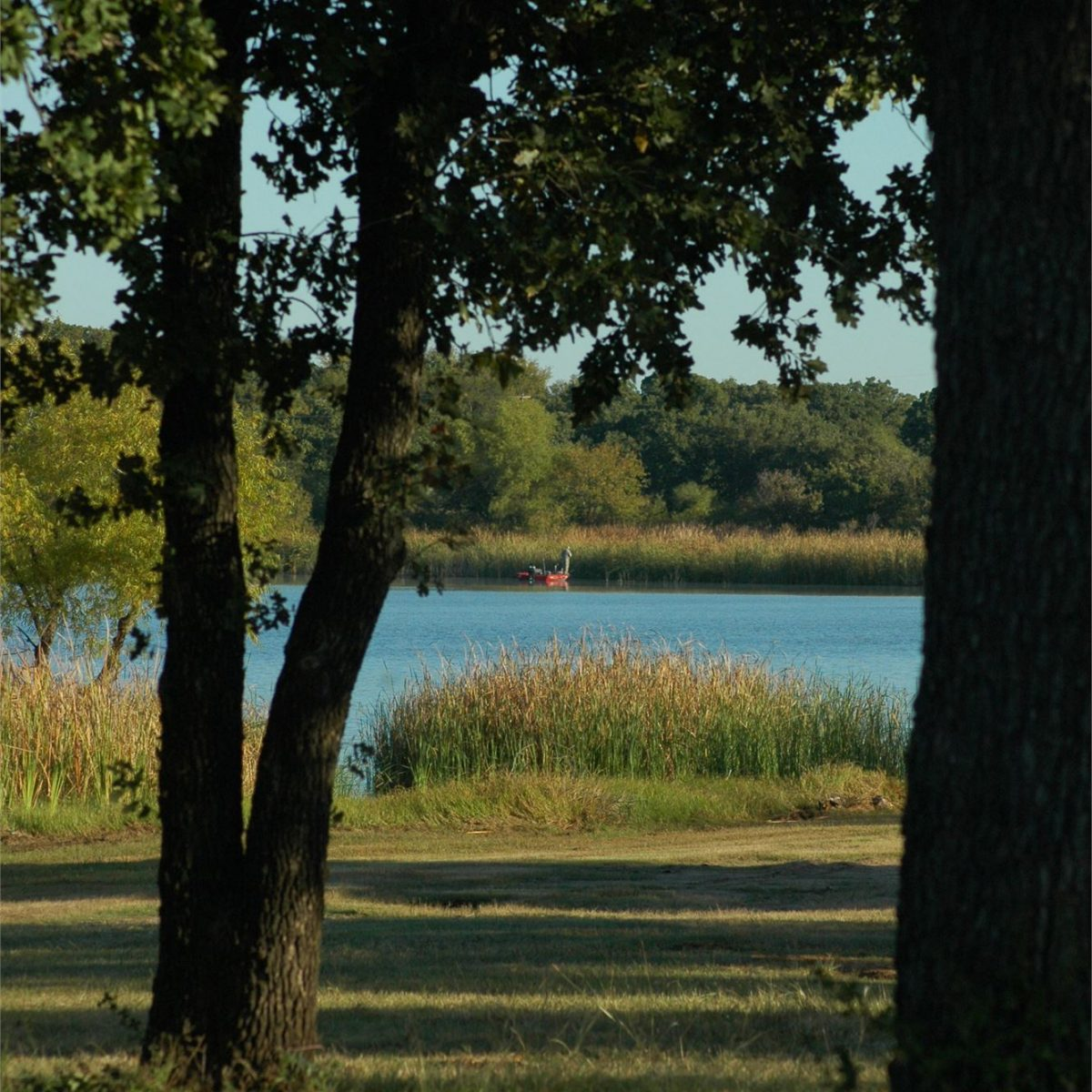 Lake Eddlemen view through the trees